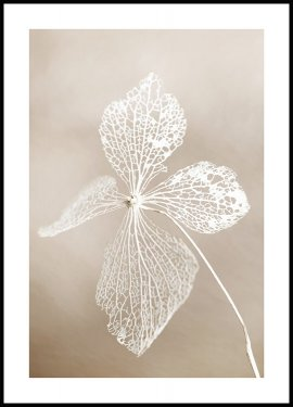 Dried flower Plakat