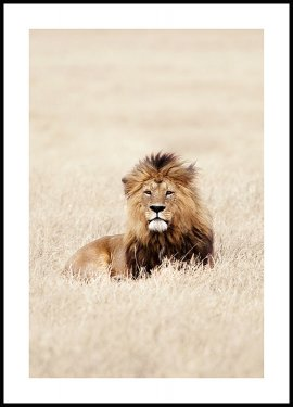 King of Lions Plakat