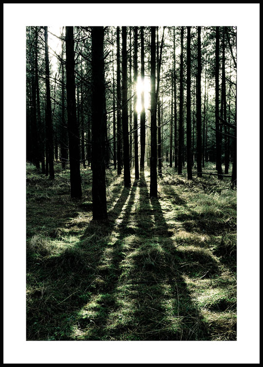 Forest Sunlight Plakat