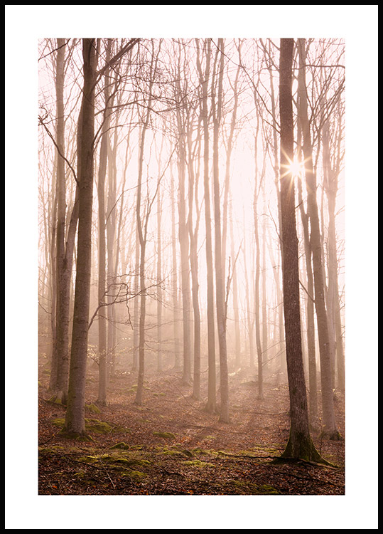 Sunlight in the Forest Plakat
