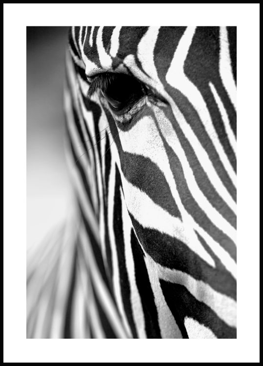 Zebra Stripes Plakat